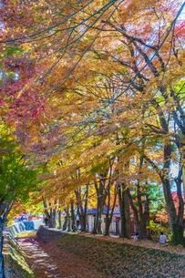 秋の彩り富士河口湖紅葉まつりの写真素材 [FYI04733806]