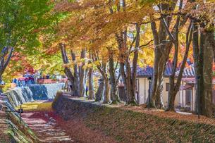秋の彩り富士河口湖紅葉まつりの写真素材 [FYI04733809]