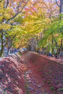 秋の彩り富士河口湖紅葉まつりの写真素材 [FYI04733831]