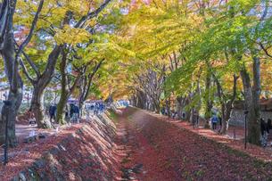 秋の彩り富士河口湖紅葉まつりの写真素材 [FYI04733833]