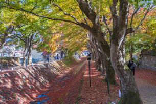 秋の彩り富士河口湖紅葉まつりの写真素材 [FYI04733837]