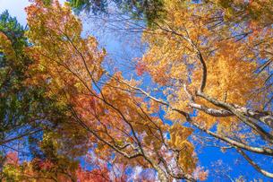 秋の彩り富士河口湖紅葉まつりの写真素材 [FYI04733839]