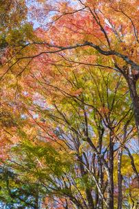 秋の彩り富士河口湖紅葉まつりの写真素材 [FYI04733847]