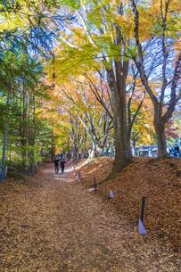 秋の彩り富士河口湖紅葉まつりの写真素材 [FYI04733853]