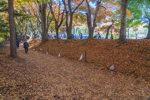 秋の彩り富士河口湖紅葉まつりの写真素材 [FYI04733859]