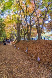 秋の彩り富士河口湖紅葉まつりの写真素材 [FYI04733861]
