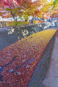 秋の彩り富士河口湖紅葉まつりの写真素材 [FYI04733863]
