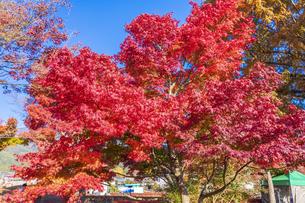 秋の彩り富士河口湖紅葉まつりの写真素材 [FYI04733873]
