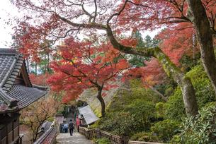 佐賀県 大興善寺の紅葉の写真素材 [FYI04733906]
