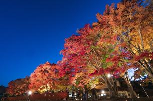 富士河口湖紅葉まつりライトアップの写真素材 [FYI04733907]