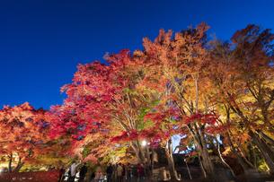 富士河口湖紅葉まつりライトアップの写真素材 [FYI04733908]