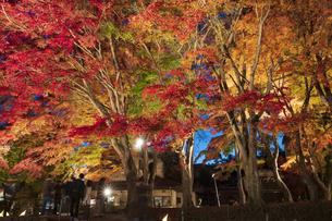 富士河口湖紅葉まつりライトアップの写真素材 [FYI04733910]