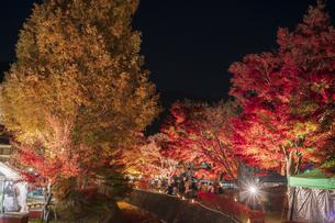 富士河口湖紅葉まつりライトアップの写真素材 [FYI04733913]