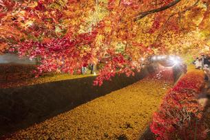 富士河口湖紅葉まつりライトアップの写真素材 [FYI04733918]