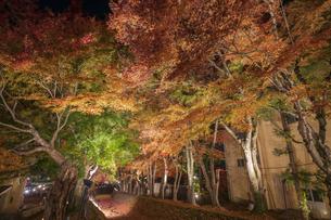 富士河口湖紅葉まつりライトアップの写真素材 [FYI04733922]
