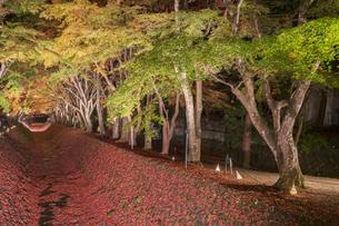 富士河口湖紅葉まつりライトアップの写真素材 [FYI04733929]