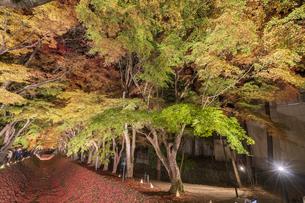 富士河口湖紅葉まつりライトアップの写真素材 [FYI04733934]