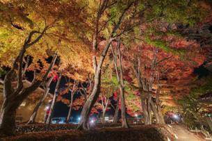 富士河口湖紅葉まつりライトアップの写真素材 [FYI04733956]