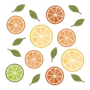 スライス 柑橘類 水彩 イラストのイラスト素材 [FYI04734054]