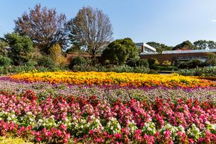 福岡市植物園の花壇と温室のある風景の写真素材 [FYI04734063]