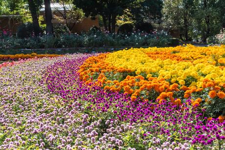 福岡市植物園の花壇とばらの写真素材 [FYI04734065]
