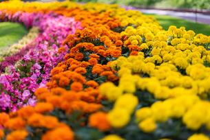 福岡市植物園の花壇の写真素材 [FYI04734085]