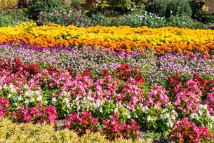 福岡市植物園の花壇とばらの写真素材 [FYI04734087]