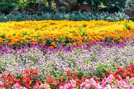 福岡市植物園の花壇とばらの写真素材 [FYI04734088]