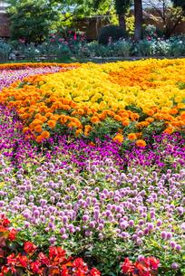 福岡市植物園の花壇とばらの写真素材 [FYI04734089]