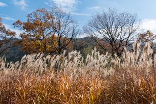 秋の久住タデ原湿原の写真素材 [FYI04734105]