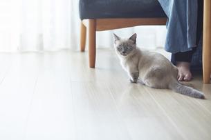 女性と部屋で遊ぶ子猫の写真素材 [FYI04734139]