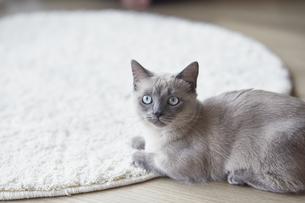 カメラ目線の子猫の写真素材 [FYI04734166]