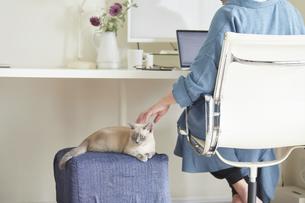 デスクでパソコンを開き仕事をする女性と子猫の写真素材 [FYI04734168]