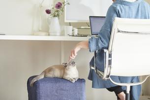 デスクでパソコンを開き仕事をする女性と子猫の写真素材 [FYI04734180]
