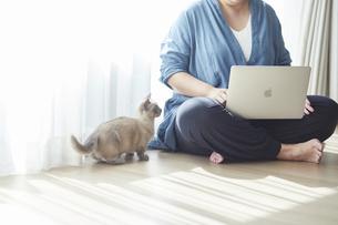 窓際でパソコンを開き仕事をする女性と子猫の写真素材 [FYI04734187]