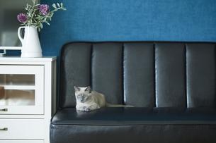 ソファと子猫と花の写真素材 [FYI04734199]