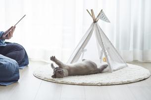 窓際でタブレット端末を見る女性と子猫の写真素材 [FYI04734201]