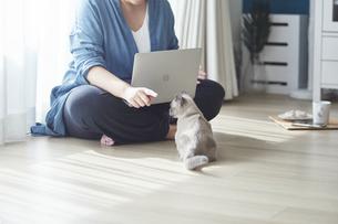 窓際でパソコンを開き仕事をする女性と子猫の写真素材 [FYI04734212]