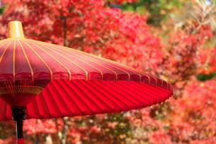 和傘と紅葉の写真素材 [FYI04734273]