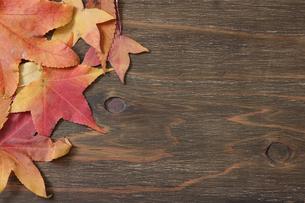 木材背景の落葉の写真素材 [FYI04734307]