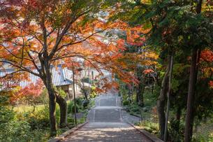 太郎坊の参道の階段を上から見下ろすの写真素材 [FYI04734323]