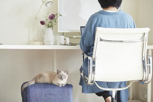 デスクでパソコンを開き仕事をする女性と子猫の写真素材 [FYI04734464]