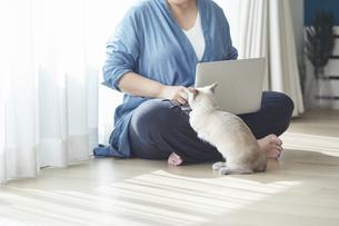 窓際でパソコンを開き仕事をする女性と子猫の写真素材 [FYI04734466]