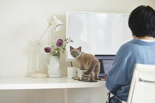 デスクでパソコンを開き仕事をする女性と子猫の写真素材 [FYI04734469]