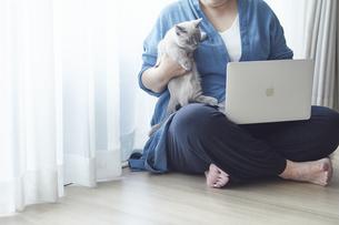 窓際でパソコンを開き仕事をする女性と子猫の写真素材 [FYI04734470]