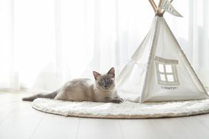 カメラ目線の子猫の写真素材 [FYI04734471]