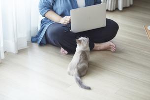 窓際でパソコンを開き仕事をする女性と子猫の写真素材 [FYI04734474]