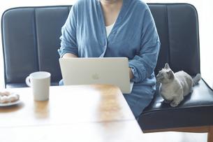 ソファでパソコンを開き仕事をする女性と子猫の写真素材 [FYI04734475]