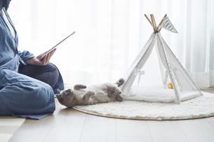 窓際でタブレット端末を見る女性と子猫の写真素材 [FYI04734477]