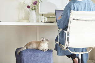 デスクでパソコンを開き仕事をする女性と子猫の写真素材 [FYI04734479]